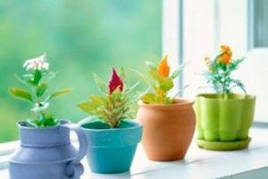 Qu hierbas plantar para tener en la cocina - Especias para la cocina ...