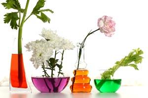 decoracion con plantas de interior