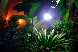 C mo iluminar el jard n for Iluminar arboles jardin