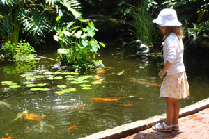 C mo hacer un estanque para peces en el jard n for Peces para criar en estanques