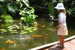 Cmo hacer un estanque para peces en el jardn